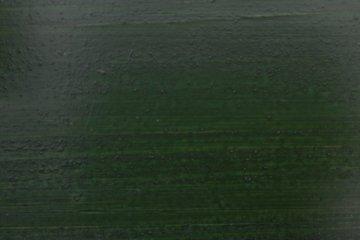 Olejová lazura OSMO - Jedlově zelená